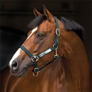Field Safe Headcollar